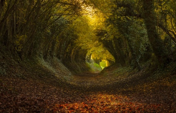 lg Tunnel-of-Trees-Finn-Hopson-1024x662